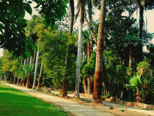 Museum Cairo Egypt Trees Palace Antique