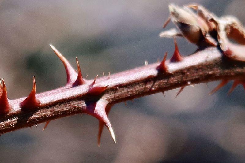 Close-up of starfish on tree branch