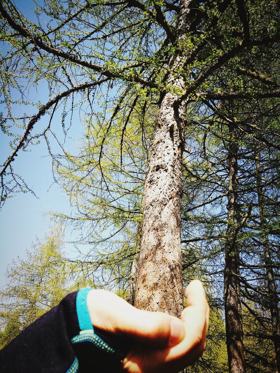 tree, one person, real people, tree trunk, nature, forest, day, human body part, human hand, outdoors, low angle view, branch, beauty in nature, sky, close-up, people