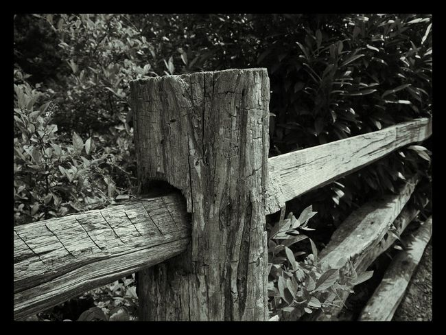 TGI Fence Post Friday Bnw_friday_eyeemchallenge For My Friends That Connect Black & White