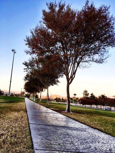 Walkway Home Park Walkway Sunsetatthepark EyeEm Sunset Walkinghome At The Park