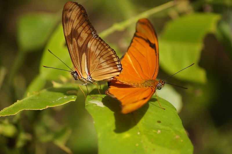 Animal Antenna Animals In The Wild Beauty In Nature Butterfly Butterfly - Insect Nature Symbiotic Relationship Wing