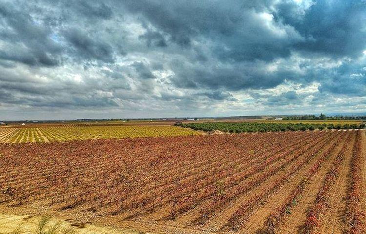 El Enoturismo se celebra el próximo fin de semana en todo el mundo, pero sólo en CastillaLaMancha tendrás estas vistas. Estos viñedos son de @verumbodegas que el sábado 7 tiene dos sesiones de puertas abiertas. Te esperamos, te espero el sábado a las 12:00 en Tomelloso