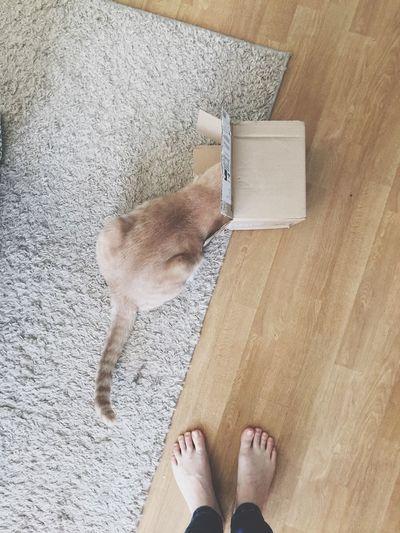Cat In The Box Cute Cat Cat Cat In A Box Cats Orange Cat Stripy Cat