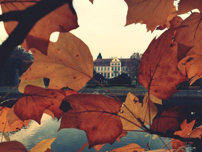 IPhoneography The Week Of Eyeem Autumn Colors The Week On EyeEm IPS2015Fall