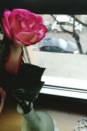 Window Close-up Indoors  Day Roses Flower Vase Rain Rainy Day Rainy Sunday Pink Focus On Foreground Top Perspective Topview