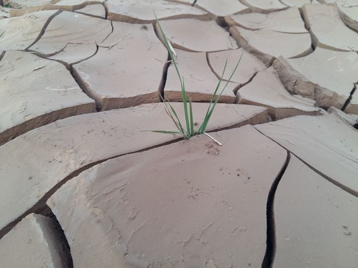 Drought Hope Life Not Impossible Beauty In Nature Drought Period Hopefulness Plant The Challenge