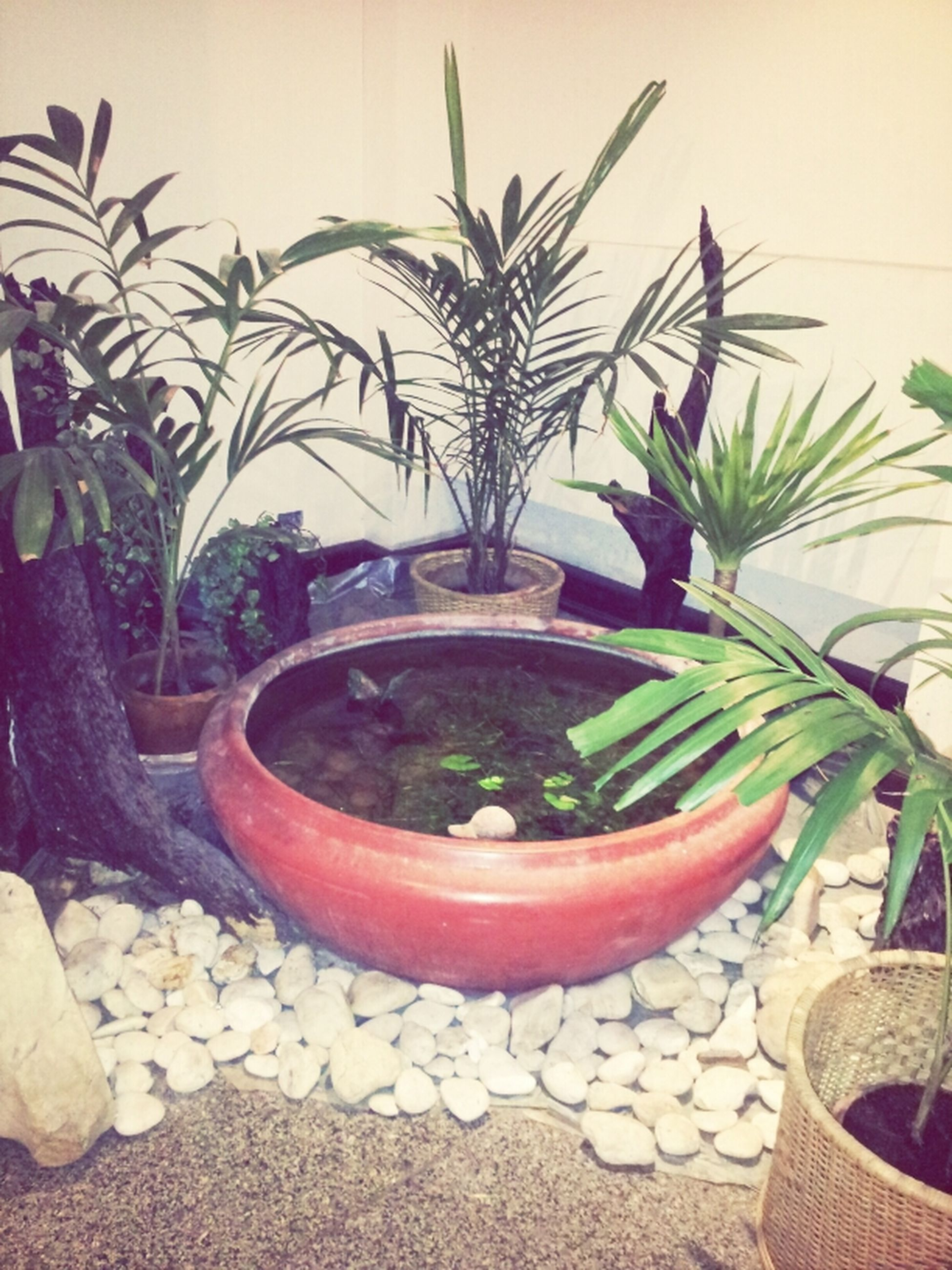 potted plant, plant, growth, leaf, nature, day, chair, sunlight, tree, palm tree, outdoors, water, green color, no people, wall - building feature, table, relaxation, beauty in nature