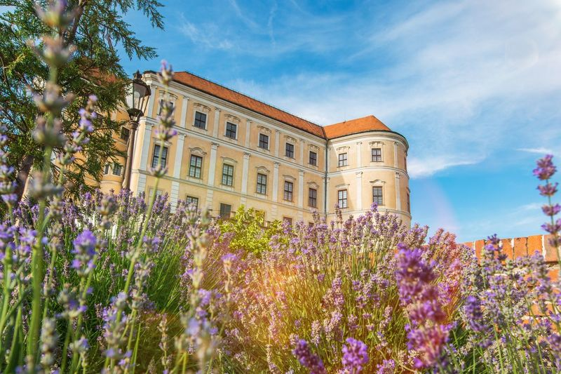 Mikulov Castle in South Moravia, Czechia, Europe. Mikulov Castle in Summer. Mikulov Czechia Czech Republic Castle Plant Architecture Flower Building Exterior Flowering Plant Built Structure Nature Sky Building Cloud - Sky Beauty In Nature Day Garden No People Formal Garden Tree Outdoors Purple Blue Window Ornamental Garden Flowerbed