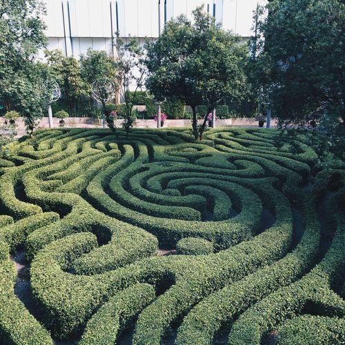 High Angle View Of Hedge Maze