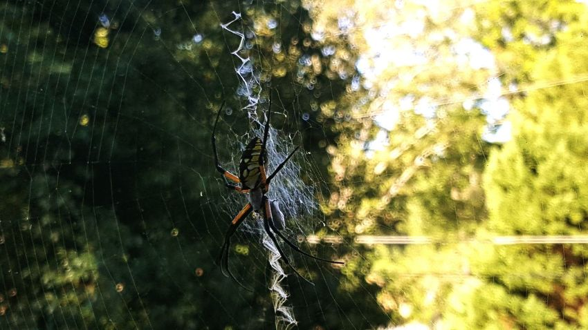 Spider Spiderweb Outdoors No People Close-up Nature Green Color Tranquility Beauty In Nature