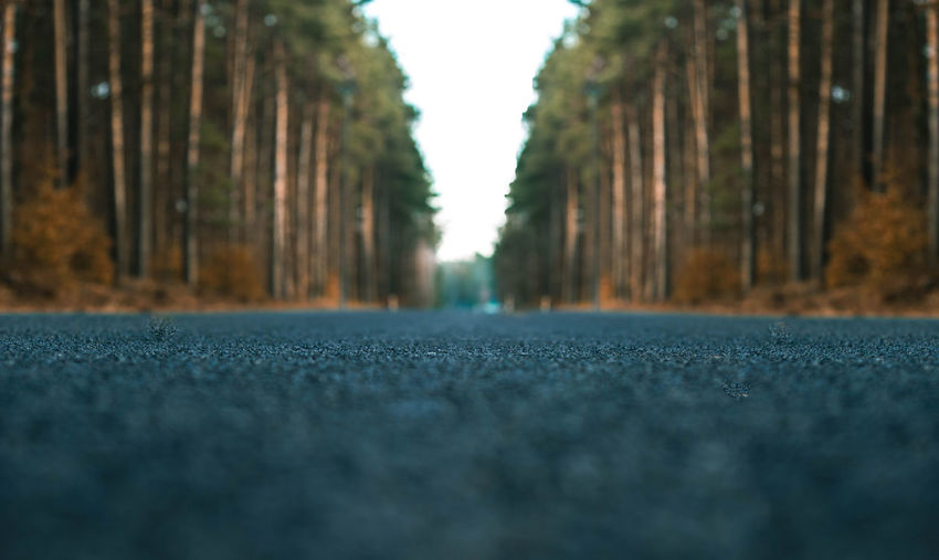 Surface level of road against trees in city