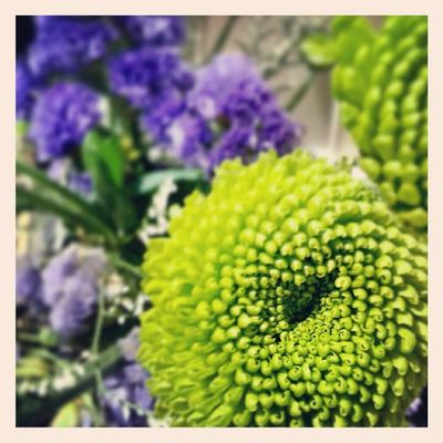 Instabest Instacool Light Green flower violet
