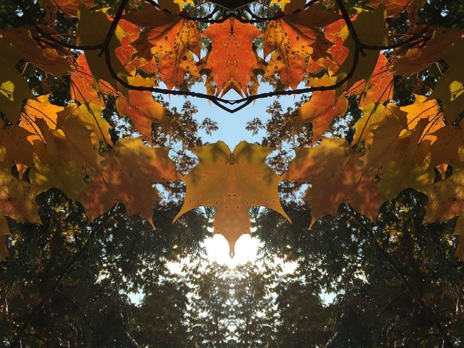 No People Backgrounds Tree Full Frame Digital Composite Close-up Pattern Abstract Design Orange Color Day Creativity Nature Plant Outdoors