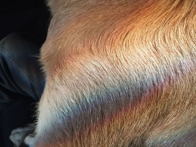 Rainbow Dog Ellie.