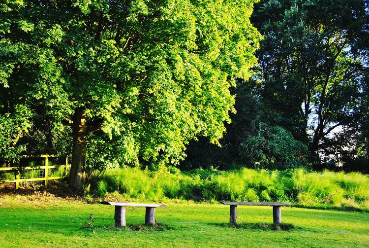 Side by side Tree Green Color Growth No People Nature Grass Freshness Holywells Park Outdoors Benches Solitude Park Field Fieldscape