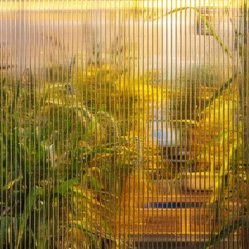 Plant Yellow Glass Glasshouse Laboratory Botany