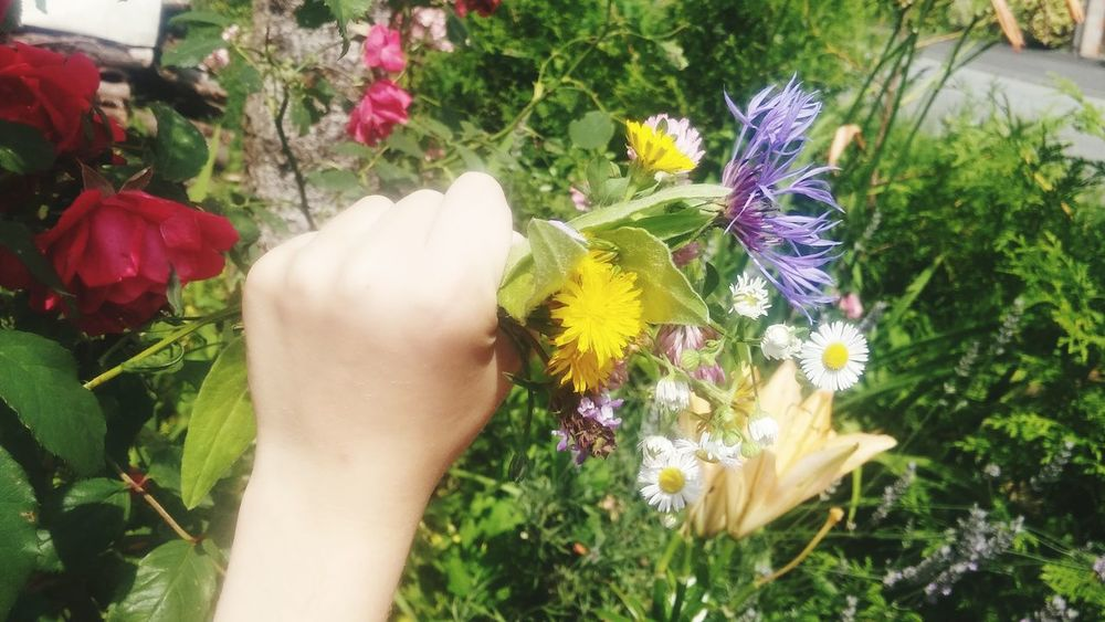 Wiesenblüten in Kinderhand Flower Human Body Part Human Hand One Person People Personal Perspective Human Arm Adult Front Or Back Yard Freshness Nature Outdoors Holding Plant Fragility Summer Day Kinderhand Hand Wiesenblume Flowers,Plants & Garden Nature Garden Photography Bloosom Blüte