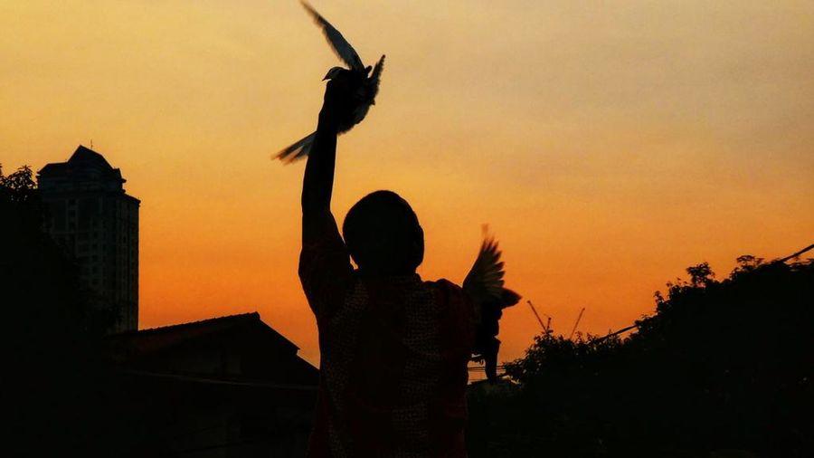 Bird man Sunset