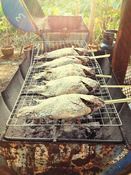 Food Fish Barbecue Season Iron - Metal Close-up Barbecue Grill Dinner Time It is good to eat fish barbecue in the evening time.