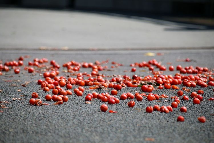 Close-up of red berries on street