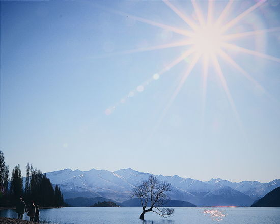 Newzealand Tree Discovernewzealand Travel Nature Mountain Lake View Sun People Bright Lonely Wanaka Tree