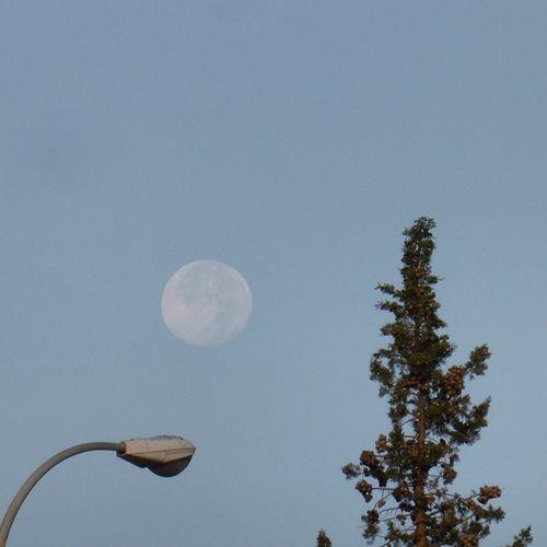¿Quién alumbra a quién? Skylovers Moon Zaragozadestino Lunalunera tree igerszgz igersaragon sky Zaragoza