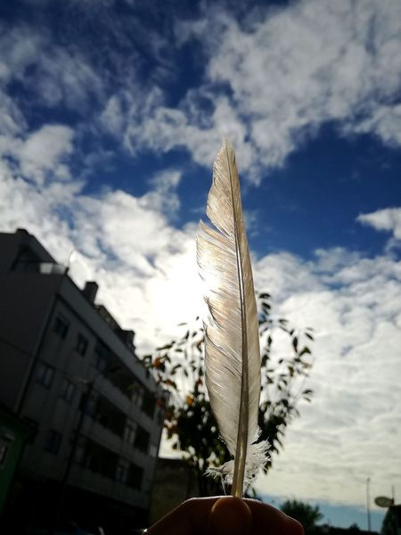 Cloud - Sky Sky Building Exterior Architecture Low Angle View No People Outdoors Day Built Structure Growth Close-up Nature Beauty Featheredbeauties Feathered Beauty Feather Clouds Feather Of A Bird Feathers Perfection Beauty In Nature Sunlight Colors Of Nature Feather  Beautiful Nature Color Of Life City