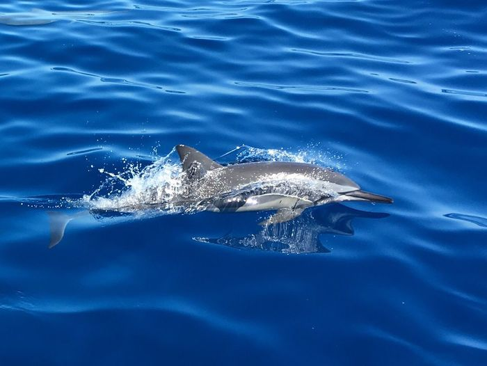 Water Animal Wildlife Dolphin Sea Beauty In Nature
