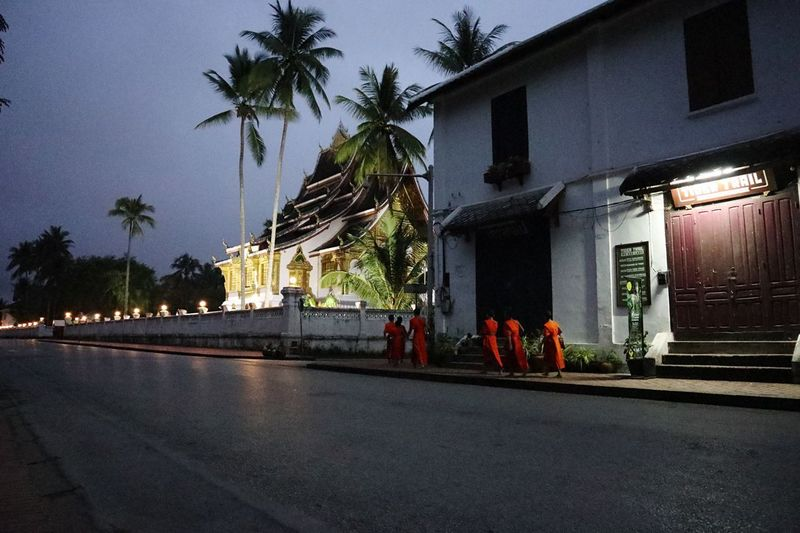 Monastery monks preparing for the alms giving ceremony at dawn in Luang Prabang Laos Laos Culture Temple Monks Luang Prabang Alms Giving Ceremony Dawn Built Structure Building Exterior Architecture Plant Tree Building Illuminated Religion Road Street Outdoors