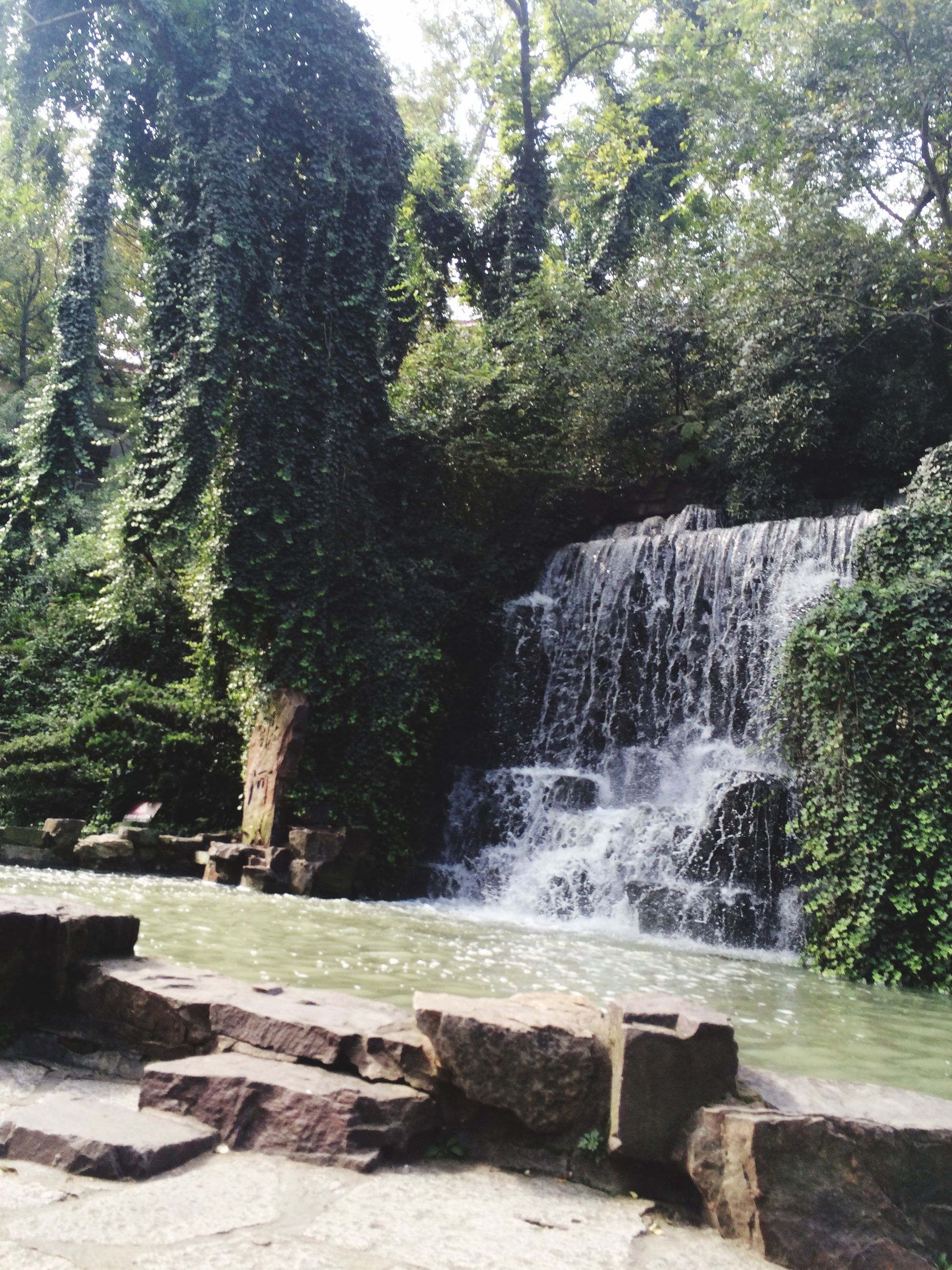 tree, water, rock - object, flowing water, beauty in nature, scenics, motion, waterfall, nature, forest, tranquility, tranquil scene, flowing, growth, idyllic, long exposure, day, sunlight, non-urban scene, park - man made space