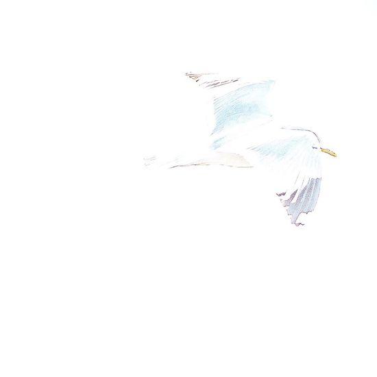 Flying over white background