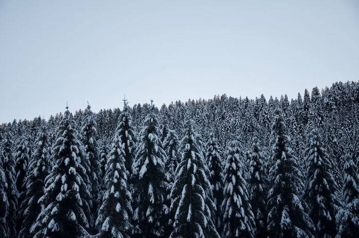Shades Of Winter Wood Beauty In Nature Clear Sky Cold Temperature Day Growth Landscape Nature No People Outdoors Scenics Sky Snow Tranquil Scene Tranquility Tree Winter