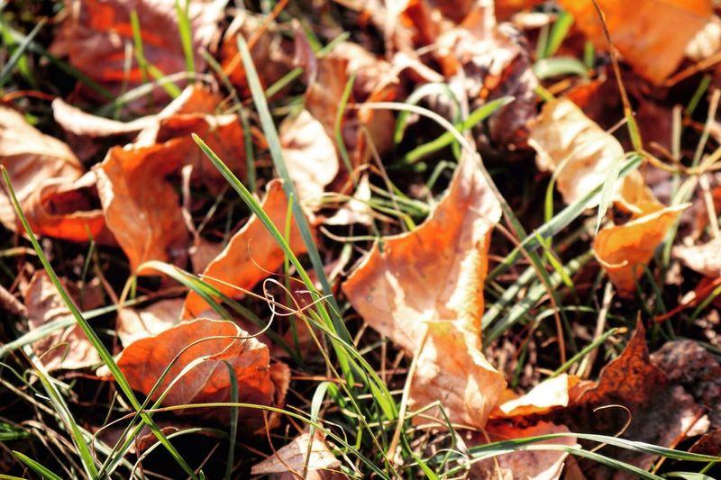 осень мои фото фотолюб учусьфотать Autumn Taking Photos 10likes Vscocam Likeforlike Follow