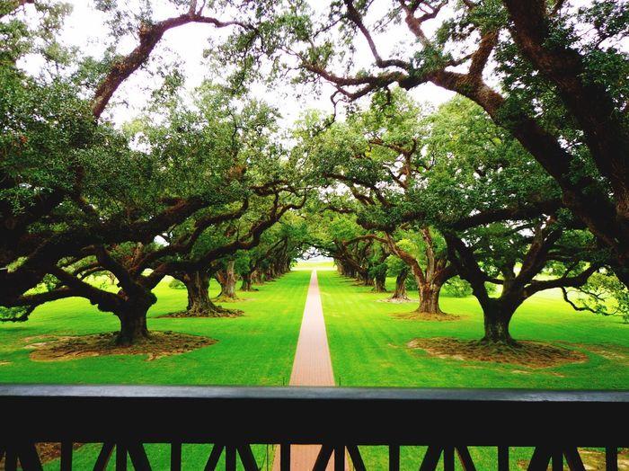 Nature Oak
