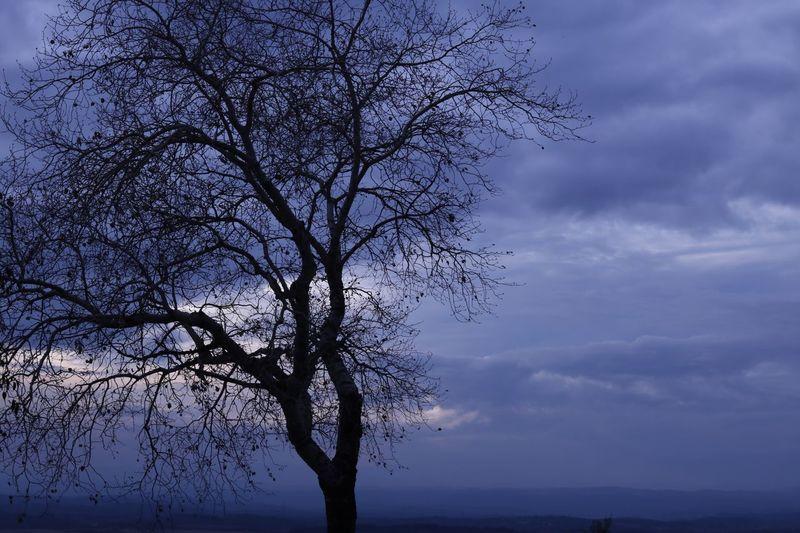Tree of life ✨
