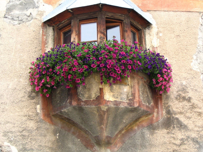 a facade with a window covered with purple and lilla petunias Window Wood Wall Flowers Petunia Purple Lila Stone Nature Beauty Flower Flowering Plant Plant Freshness Fragility Architecture No People Pink Color Flower Head Outdoors Beauty In Nature Stone Wall Building Vulnerability  Growth Built Structure Building Exterior Day Wall - Building Feature Close-up