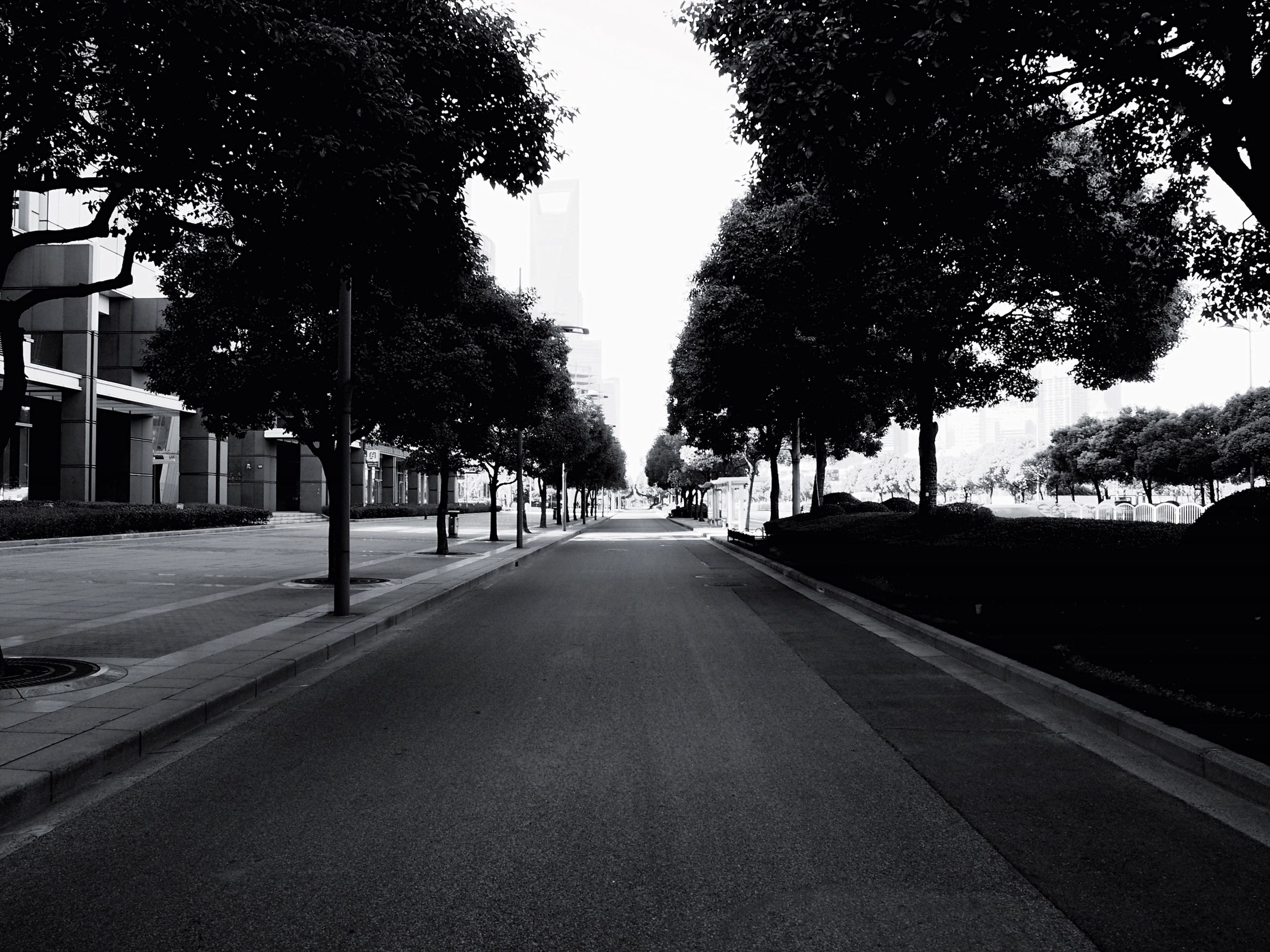the way forward, tree, diminishing perspective, transportation, vanishing point, road, treelined, street, road marking, empty, long, sky, empty road, building exterior, incidental people, outdoors, built structure, city, in a row, street light