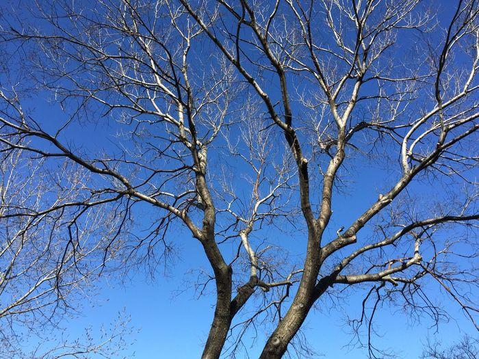 TreePorn Tree Sky Enjoying The Sun Weather Ktu Relaxing