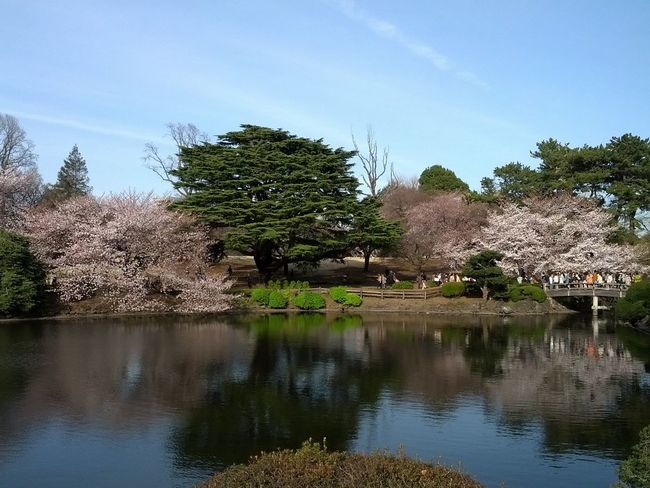 """Japanese beauty """"Sakura cherry blossom"""" in little spring time only. Photo at """"Kyu-Furukawa Garden place"""". Nature Tree Water Reflection Lake Landscape Sky Reflection Outdoors No People Day 旧古河庭園 東京都 First Eyeem Photo Tokyo,Japan Japan Photography Japanese Garden Japan"""