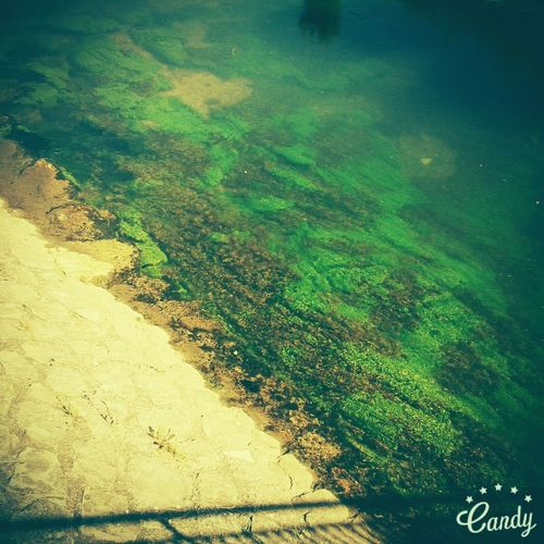 Water Moos Bridge Nature Brenz Nature Photography