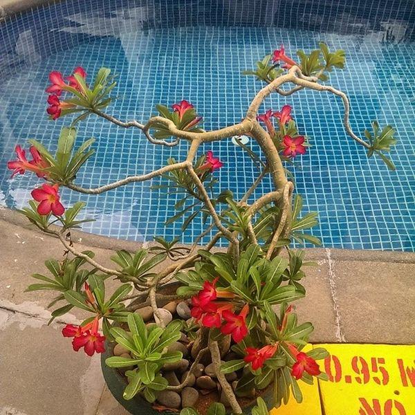 Flower Pool Plant