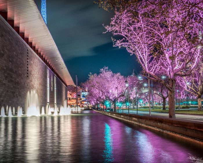 NGV at night National Gallery Of Victoria NGV Melbourne Ngv Fountain Water Night Night Lights Building Exterior vanishing point Pink Pink Tree Long Exposure City Life Melbourne City Melbourne Melbournecbd Night Skyline Waterfront Pink Color Nightphotography EyeEm Selects City Water Tree Cityscape Illuminated Reflection Purple Sky Architecture