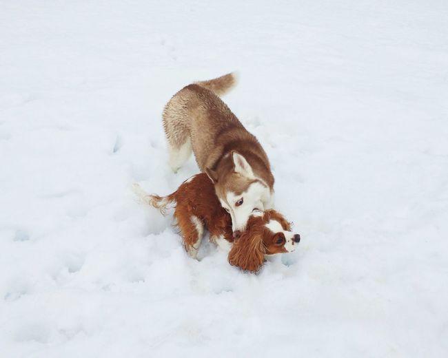 Sibling Love winter wasn't so bad I recall... IPhoneography Shootermag EyeEm Best Shots Snow ❄