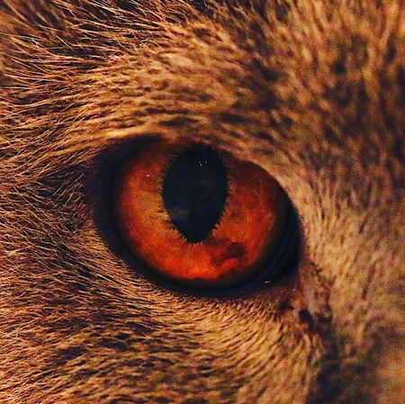 CAT Eye BKH Kater Cat Eye Full Frame Backgrounds Close-up Outdoors
