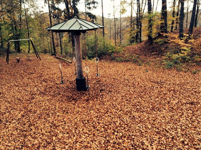 Magischer Waldspielplatz Forest Photography Forest Playground Waldspielplatz Playground