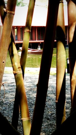 Hidden boat of life... Bamboo Grove Lakeview Cool_capture_