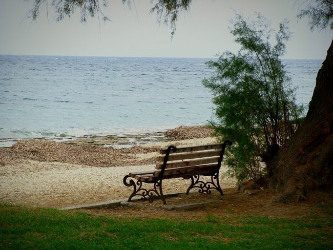 bench Bench Sea Water Beach Tree Nature Horizon Over Water Relaxation Beauty In Nature Tranquility Scenics