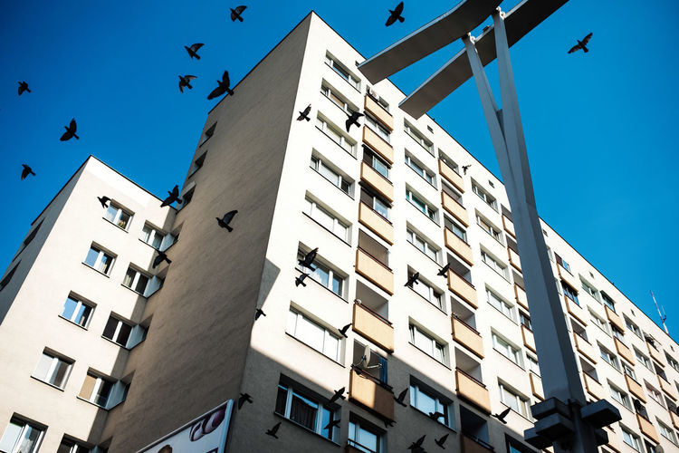 Low angle view of birds flying by building