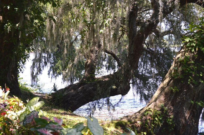 Falling trees . Magnolia plantation , Charleston sc . Tree Nature Tranquility Tranquil Scene Day Outdoors Beauty In Nature Scenics No People Water Forest Branch Sunlight Tree Trunk Growth Charleston South Carolina